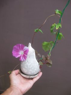 盆栽:朝顔 |春嘉の盆栽工房