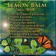 Lemon Balm #herbalremedies #herbs #naturalhealing