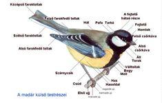 JELES NAPOK A KÖRNYEZET- ÉS TERMÉSZETVÉDELEMBEN Bird Tree, Nature Study, Nature Animals, Life Cycles, Green Day, Flora, Environment, Education, Animales