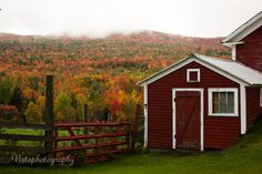 hill ablaze with Autumn color and red shed in Sugar Hill, NH by Vistaphotography