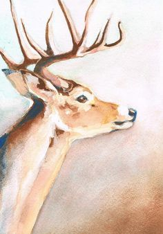 Deer Portrait - Original Watercolor. $50.00, via A Crows Vision on Etsy.