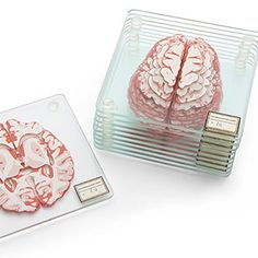 Stackable Brain Specimen Coasters Reveal a 3D View of the Human Brain