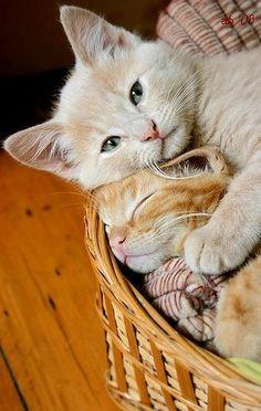 Loving kittens by Arfi Binsted via Love Meow~ Sweet Dreams...