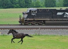 Norfolk Southern #7647 racing the pony. Photo by Norfolk Southern RR