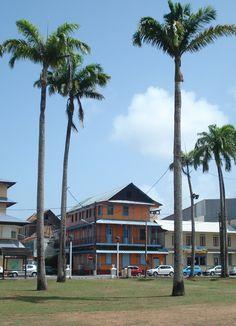 De la Bretagne à la Guyane (St Laurent du Maroni): 124 - Balades autour de Cayenne. Le zoo de Guyane
