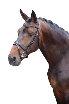 QHP Zeus Equestrian Decor, Horses, Animals, Shopping, Products, Animales, Animaux, Animal, Animais