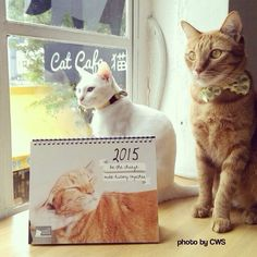 """:""""Good Evening!!""""  Come and support our community cats by buying a copy of Cat Welfare Society 2015 calendar at Cat Cafe Neko no Niwa located at 54A Boat Quay :)  Thank You very much!!  www.facebook.com/SlothStudio"""