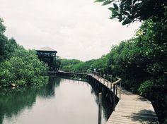 Mangrove Forest Conseravation.  Nature always Fascinated!!! Denpasar - BALI - INDONESIA  #SelfTaken #IOSCam #VSCO