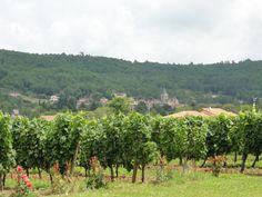 Village de Duravel, Vignoble de Clos du Chêne Cahors