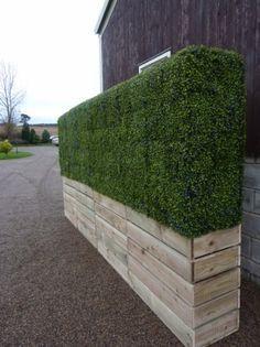 privacy hedge cedar grasses - Google Search