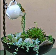 I have really bad luck with most hanging succulents like string of pearls but I love how this looks! Mini jardim com suculentas Like the idea of the spilling of plants into a planter Succulent Gardening, Cacti And Succulents, Planting Succulents, Container Gardening, Planting Flowers, Organic Gardening, Indoor Gardening, Succulent Garden Ideas, Mini Cactus Garden