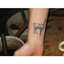 Llama tatoo