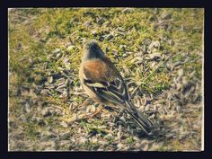 Eesti veeb: Loodusgiid Bird, Animals, Animales, Animaux, Birds, Animal, Birdwatching, Animais