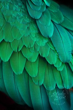 Green Macaw Parrot Feathers Photography Print, Exotic Wildlife and Bird Art for. - Womens Fashion- Green Macaw Parrot Feathers Photography Print, Exotic Wildlife and Bird Art for… – Women's Fashion aesthetic - Rainbow Aesthetic, Aesthetic Colors, Parrot Feather, Feather Photography, Green Colors, Colours, Bird Art, Shades Of Green, Illustration
