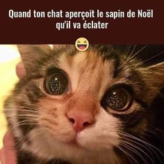 Quand ton #chat aperçoit le #sapin de #noël qu'il va #éclater !!! #blague #drôle #drole #humour #mdr #lol #vdm #rire #rigolo #rigolade #rigole #rigoler #blagues #humours Funny Animal Quotes, Funny Animals, Cute Animals, Funny Cats, Funny Jokes, Funny French, Image Fun, Pokemon, Cat Memes