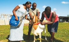 """""""Pay It Forward"""" with Goats [HAITI] $110   buys a pregnant goat for a family in Haiti. Eventually that family will """"pay it forward"""" giving a pregnant goat to another needy family."""