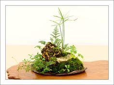 Cyperus, fern, wild plants and moss