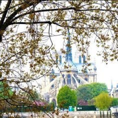 Notre Dame, Paris I Fall In Love, Vacation Spots, Notre Dame, Spaces, Vacation Places, Vacation Resorts, Holiday Destinations
