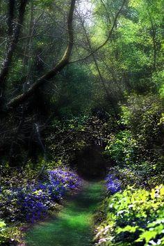swansong-willows:Secret Garden by RobIreland on Flickr