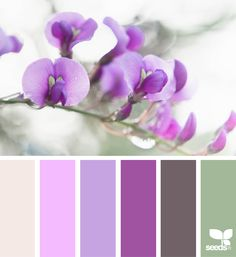 { flora hues } image via: The post Flora Hues appeared first on Design Seeds. Colour Pallette, Colour Schemes, Color Combos, Design Seeds, Soothing Paint Colors, Colours That Go Together, Color Balance, Crazy Colour, Color Swatches