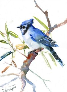 Blue Jay, Original watercolor painting, 12 X 9 in, blue bird watercolor art, watercolor painting
