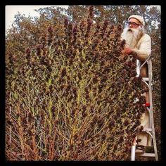 thedailychief:  Santa getting gifys ready   :...