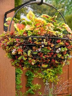 A colorful basket of coleus with sedum around the base
