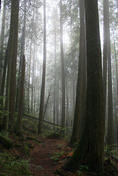 'Through The Fog' by Tanya Kenworthy-Mosher British Columbia, Time Travel, Porn, Bucket, Trees, Backyard, Canada, Earth, Live