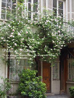 パリのシークレットガーデン 『Cour de Rohan』 フランス 小さな村を旅してみよう! Garden Cafe, Terrace Garden, Small Gardens, Outdoor Gardens, Porches, Colonial Garden, Shade Flowers, Raised Planter, Vegetable Garden Design