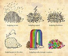 hedgehog goes rainbow- art print by joanneliuyunn, via Flickr