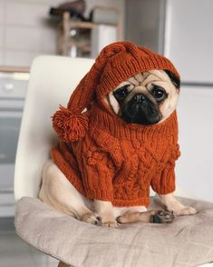 cute pug puppies Best winter care tips, protect and precautions for dogs Cute Baby Pugs, Cute Pug Puppies, Baby Dogs, Cute Dogs, Doggies, Cute Pug Pictures, Cute Animal Pictures, Cute Funny Animals, Cute Baby Animals