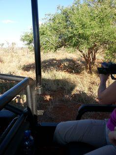 Day 2 – Madikwe Safari Lodge
