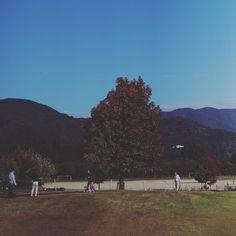 おはようございますo 昨日は夕方から雨でしたが朝になったら晴天 気持ちのいい秋晴れです 週末はどうしようかと考え中 兵庫の方へ写真撮りに行こうか和歌山へ行こうか  写真を見てよかったらいいねやコメントをもらえるとうれしいです . . #写真好きな人と繋がりたい #写真撮ってる人と繋がりたい #カメラ好きな人と繋がりたい #ファインダー越しの私の世界 #フォロー #写真部 #関西写真部 . #IGersJP #followme  #instafollow #tagforlikes  #follow4follow #webstagram #likeforlike #japan #instagood #モデル募集 #팔로우 #맞팔 #찍스타그램 . コンテストタグ #WeekendHashtagProject . #PhotoOfTheDay . #JapanHashtagProject . #instaderby . #フォトコンテストOsaka2015 . #WHPhideandseek .