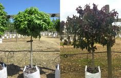Barcham Trees (@Barchamtrees)   Twitter
