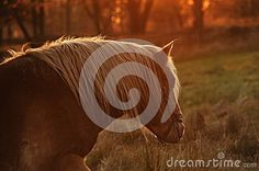 Horse on the meadow in sunset