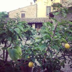 Garden of #casamasi #ristorante #tuscanygram #tuscany #montaione...