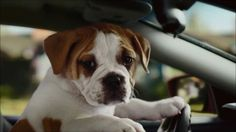 Funny dog clapping commercial by carmax Funny Commercials, Funny Dogs, Vegas, Adobe, Advertising, Animals, Humor, Tv, Animales