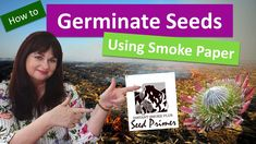 In this video we will show you the exactly how to germinate seeds using smoke paper. Some plants produce seed that will only germinate after a fire has occur. Horticulture, Seeds, Training, Smoke, Plants, Garden Planning, Work Outs, Excercise, Plant