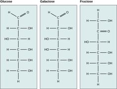 Structure and Function of Carbohydrates Chemical Structure, Structure And Function, Honey Health Benefits, Biology Poster, Chemistry Basics, Plant Tissue, School Essentials, Student Studying, Organic Chemistry