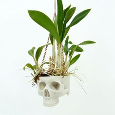 Skull Planter – Natural from Spring Green Fingers - R999 (Save 20%)