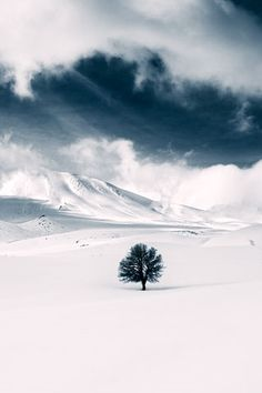 Snowy Field with tree. Snow Scenes, Winter Scenes, Landscape Photography, Nature Photography, Winter Beauty, Winter Wonder, Amazing Nature, Wonders Of The World, Mother Nature