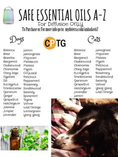 A list of doTerra Essential Oils safe to diffuse with dogs and cats around. #natural #bestfriend #doterra #noharm #essentialoils #dog #cat