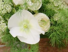 Florissimo - Flowers for weddings and events in Shropshire. HELLEBORE, NOV-MAR. From Florissimo Flower Directory at https://uk.pinterest.com/ByFlorissimo/flower-directory/ | White, pale green and greenish-pink