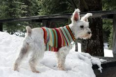 How to Turn an Old Sweater into an Adorable Dog Sweater | eHow