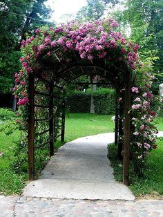 Generous arbor with old fashioned climbing roses Garden Arbor, Garden Trellis, Garden Gates, Rose Trellis, Gravel Garden, Backyard Pergola, Backyard Landscaping, Pergola Ideas, Garden Arches