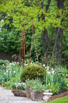 Trädgårdsflow: Tulip time. Rostiga metallkanter runt rabatten, buxbomsklot, tulpaner i vitt och lila, och klättertorn. Ett plus den fina trästegen i träden med vårgrönska. En fin blogg att följa!