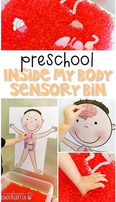 Preschool: My Body We LOVE this inside my body sensory bin. Great for learning about the human body in tot school, preschool, or even kindergarten! Body Preschool, Preschool Curriculum, Preschool Science, Preschool Lessons, Preschool Learning, In Kindergarten, Preschool Crafts, Life Science, Doctor Theme Preschool