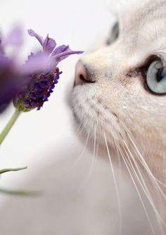 """mel-cat: """" candymapi: """" … ci sono profumi nell'aria e li senti … buongiorno   @mel-cat good morning my dear Kitty have a beautiful weekend kiss   """" have a nice sunday Mary and Samba kitty baci to you  """""""