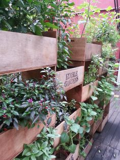 edible garden (wall divider)