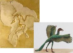 archeaopteryx, most lovely of all extinct creatures
